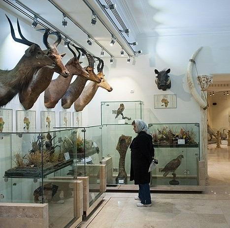موزه طبیعت و حیات وحش دارآباد