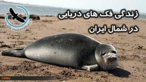 زندگی فک های دریایی در شمال ایران