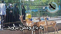 به باغ وحش بروید...