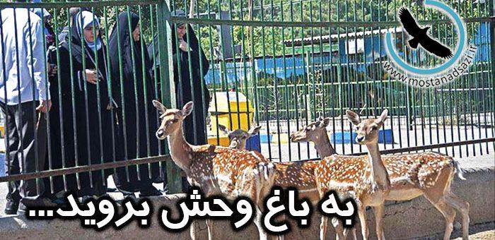 به باغ وحش بروید…