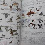 راهنمای میدانی پرندگان ایران