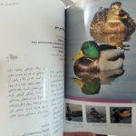 مرغابی سانان ایران