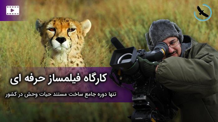 فیلمساز حرفه ای